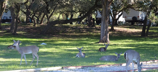 Lake Pointe RV Resort Deer